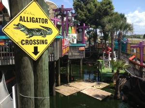 alligator-crossing