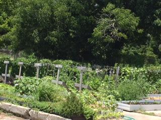 Manna Food Pantries Garden