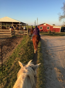Oak Hollow Farm horses