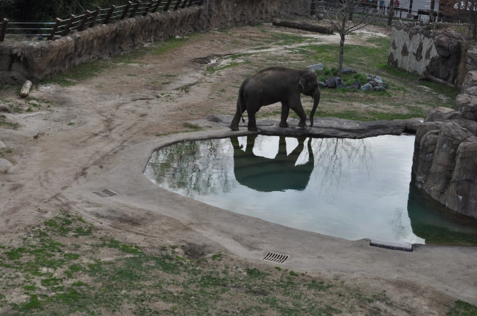 elephant_national_zoo