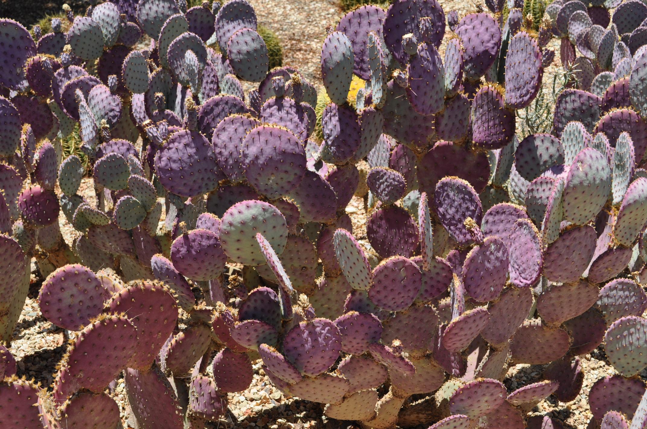 cactus_family