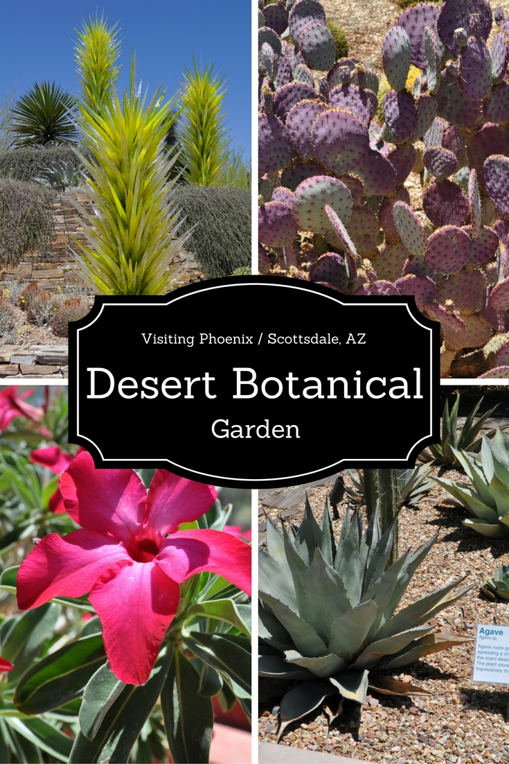 desert_botanical_garedn_phoenix_az